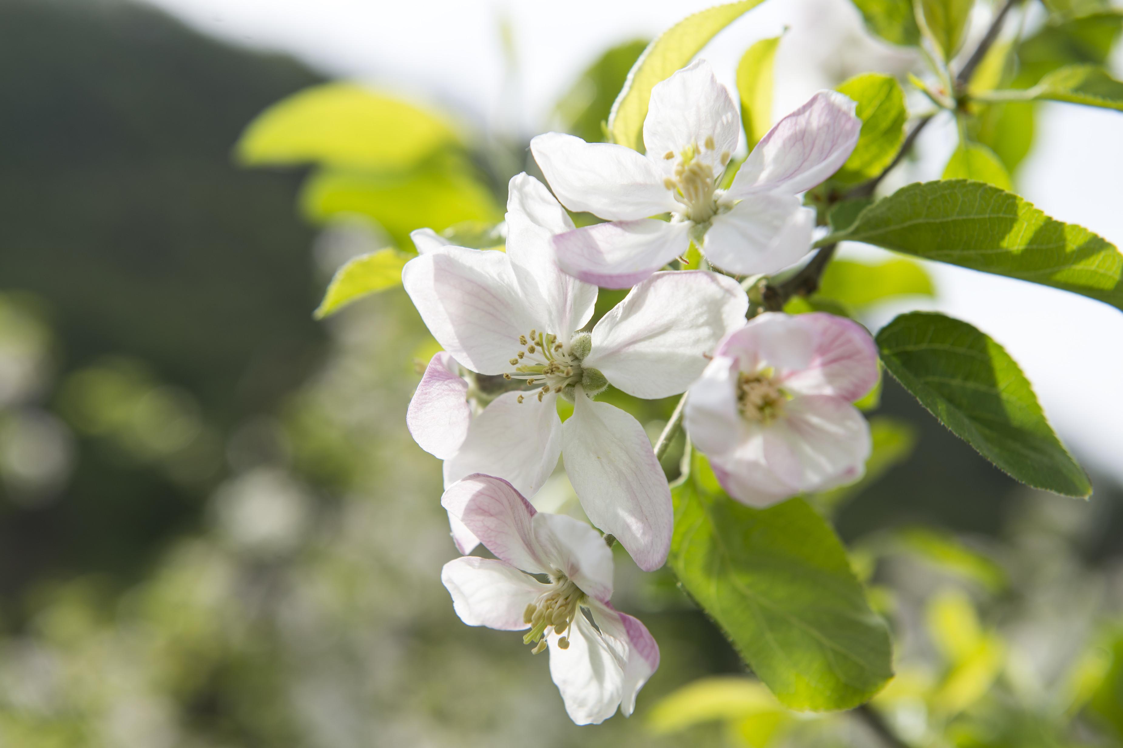 Der Frühling in Burgstall Südtirol